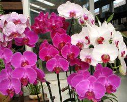 Dicas eficazes para cuidar de orquídeas