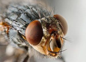 Como eliminar mosquitos